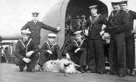 Tirpitz the pig at Royal Navy's training facility in Portsmouth Harbour